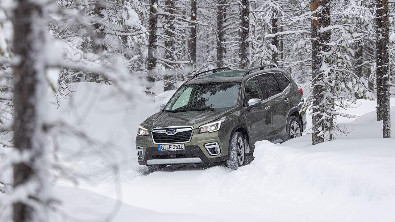 Subaru Forester e-BOXER - im Wald
